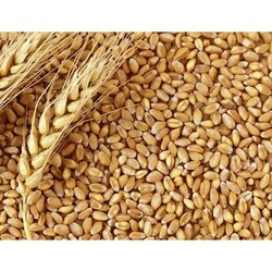Getreide - Getreide Buğday 25 Kg