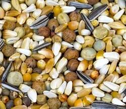 Getreide - Getreide Buğdaylı Güvercin Yemi 20 Kg