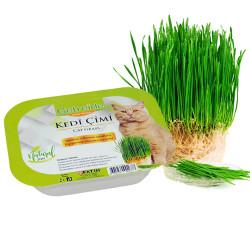 Getreide - Getreide Fileli Kedi Çimi